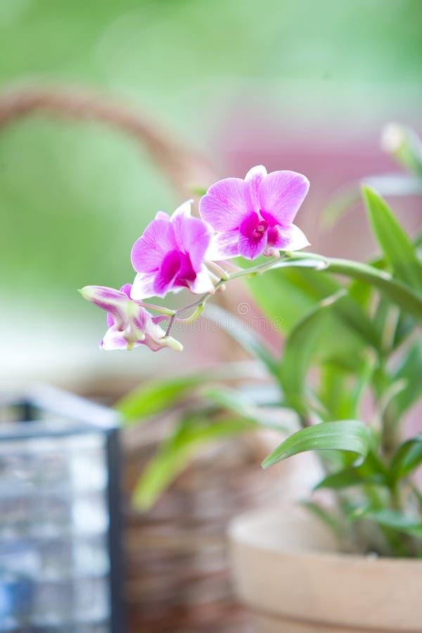 orchid καλαθιών υπαίθρια τιμή τών  στοκ φωτογραφία με δικαίωμα ελεύθερης χρήσης