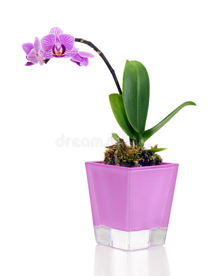 Orchid κεντρικό τεμάχιο ρύθμισης vase στο whi στοκ φωτογραφίες