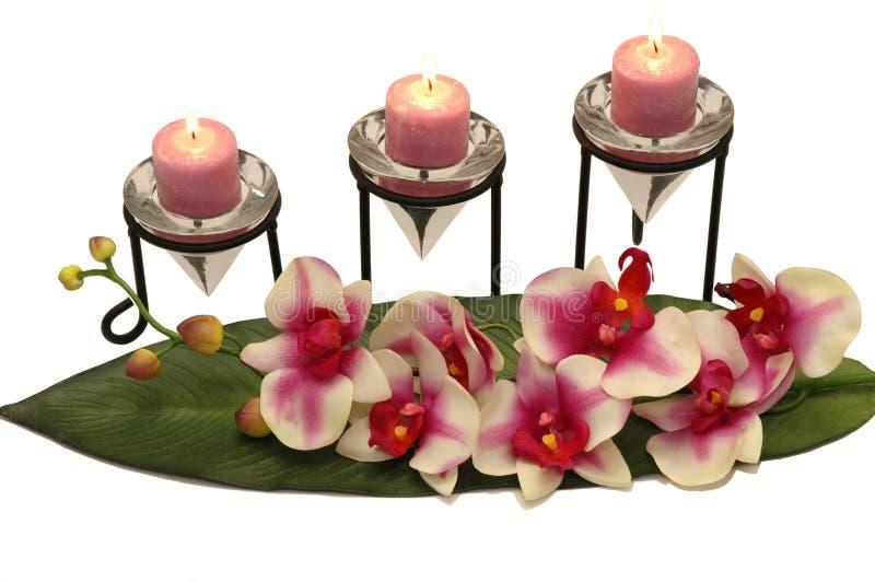 Download Orchid κεριών στοκ εικόνα. εικόνα από λουλούδι, φύλλο - 1526727