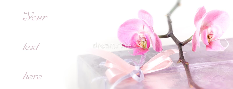 orchid κιβωτίων στοκ εικόνες