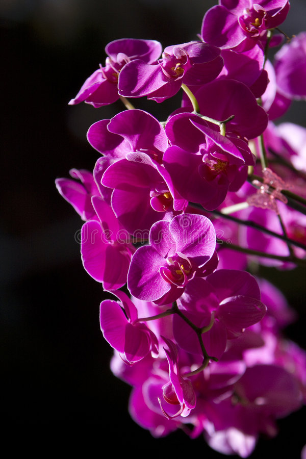orchid λουλουδιών δονούμενο στοκ φωτογραφίες
