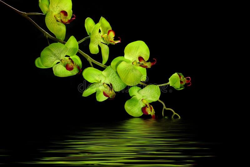 orchid λουλουδιών σχεδιασ&tau στοκ φωτογραφία
