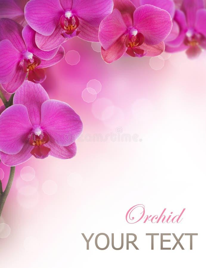 orchid λουλουδιών στοκ εικόνα με δικαίωμα ελεύθερης χρήσης