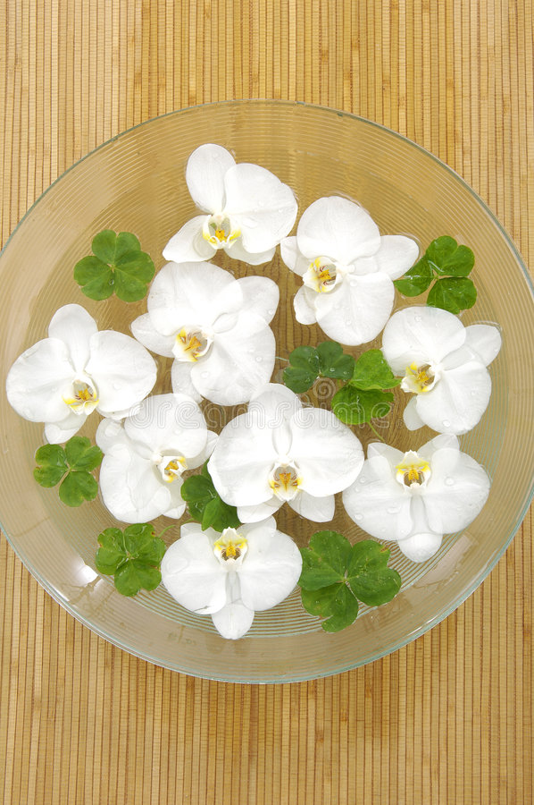 orchid λουλουδιών στοκ εικόνες με δικαίωμα ελεύθερης χρήσης