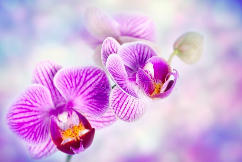 Orchid λουλούδια στοκ εικόνες