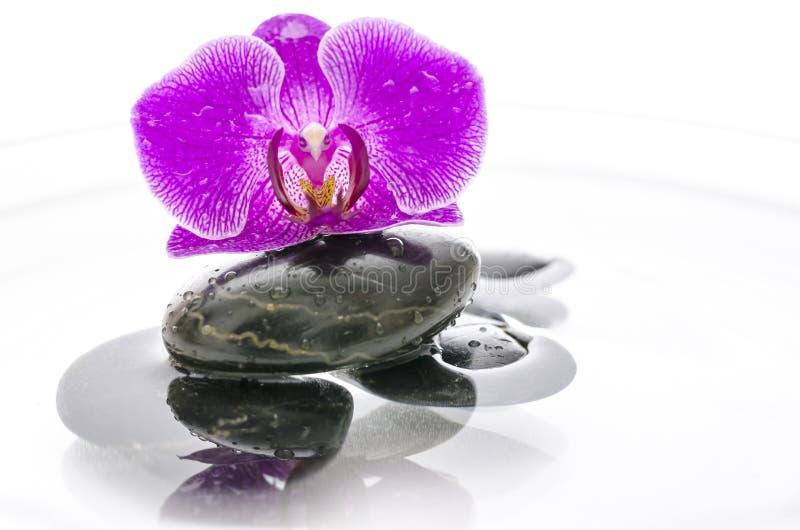 Orchid λουλούδι και μαύρες πέτρες στο νερό στοκ εικόνες