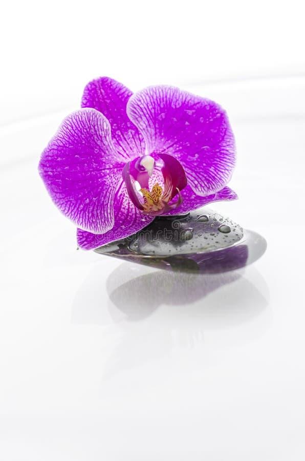 Orchid λουλούδι και μια μαύρη πέτρα στο νερό στοκ φωτογραφία με δικαίωμα ελεύθερης χρήσης