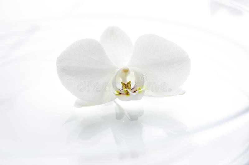 Orchid λουλούδι στο νερό στοκ εικόνες