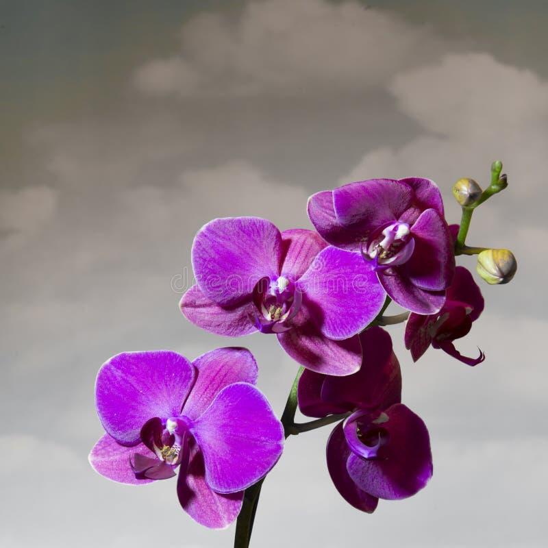 Orchid και σύννεφα στοκ εικόνα