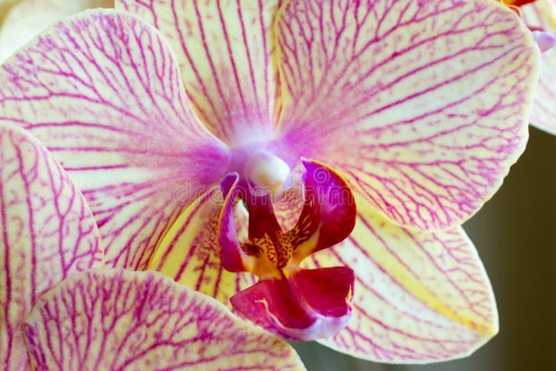 orchid λουλουδιών βιολέτα στοκ εικόνα με δικαίωμα ελεύθερης χρήσης