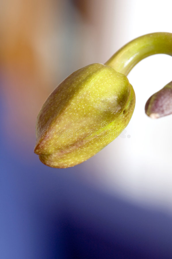 orchid οφθαλμών kaleidescope στοκ εικόνα με δικαίωμα ελεύθερης χρήσης
