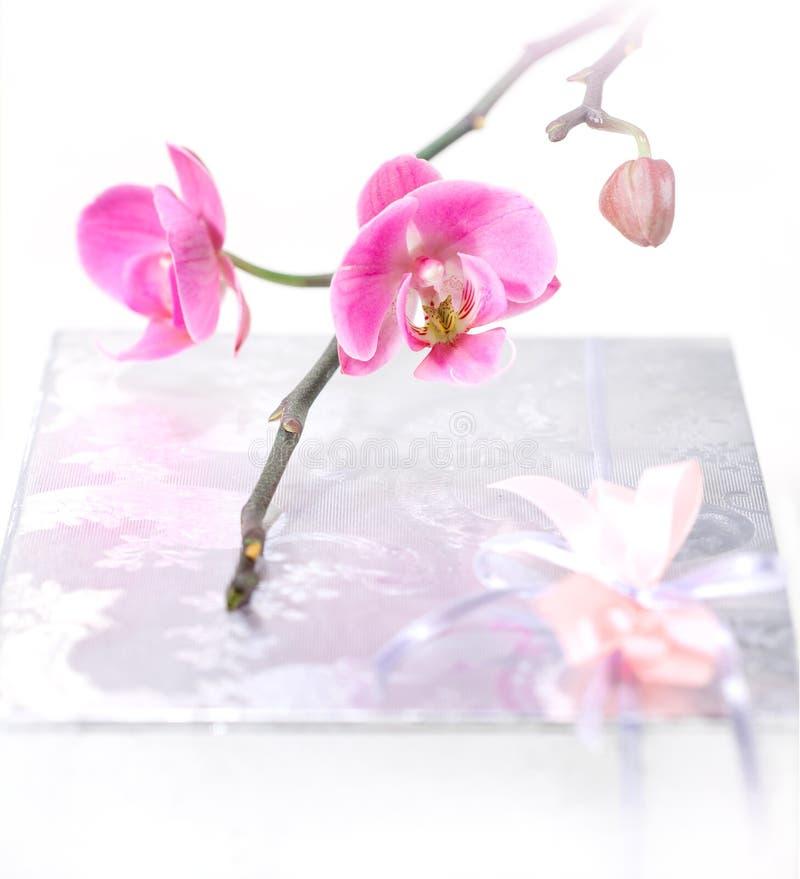 orchid παρόν στοκ φωτογραφία με δικαίωμα ελεύθερης χρήσης
