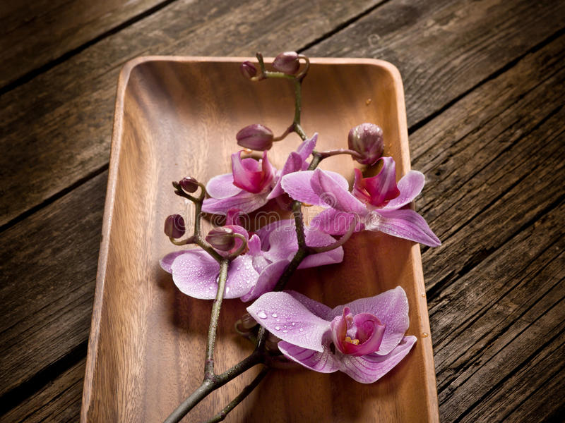 orchid πιάτων πέρα από το δάσος στοκ φωτογραφίες με δικαίωμα ελεύθερης χρήσης
