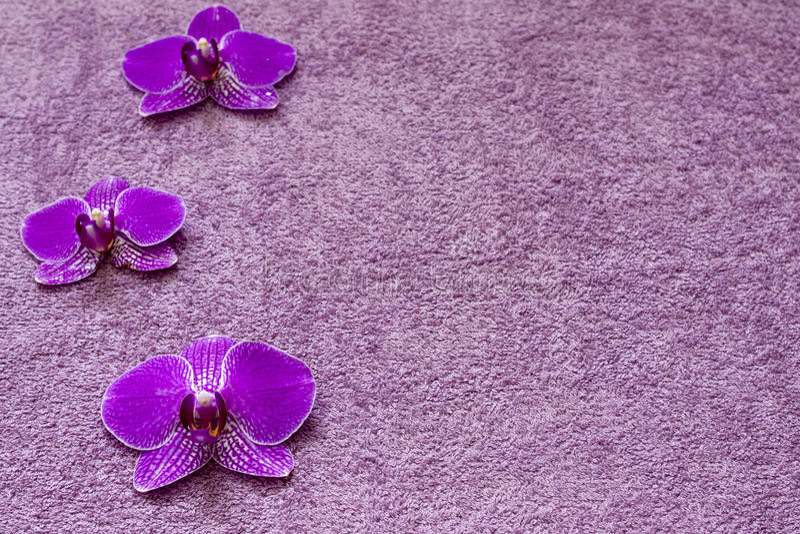 Orchid στην καλλυντική ανασκόπηση SPA πετσετών στοκ φωτογραφία με δικαίωμα ελεύθερης χρήσης