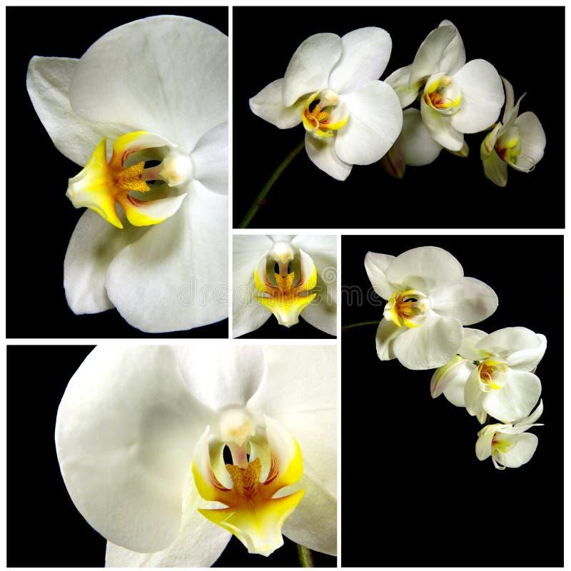 orchid σύνθεσης απεικόνιση αποθεμάτων