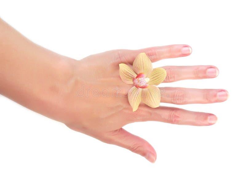 orchid χεριών γυναίκα στοκ εικόνες