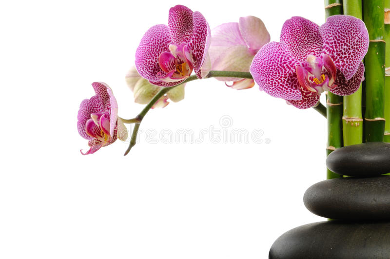 Orchid. Pink orchid and stones on the white background stock photos