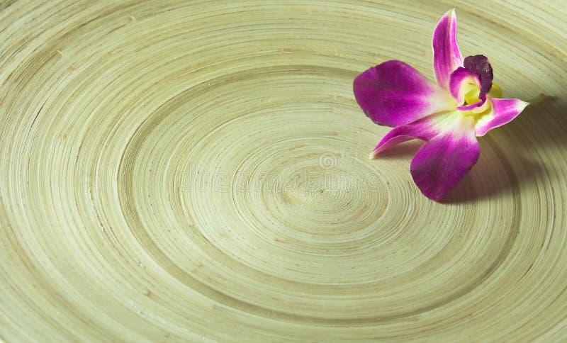 orchid στοκ φωτογραφία