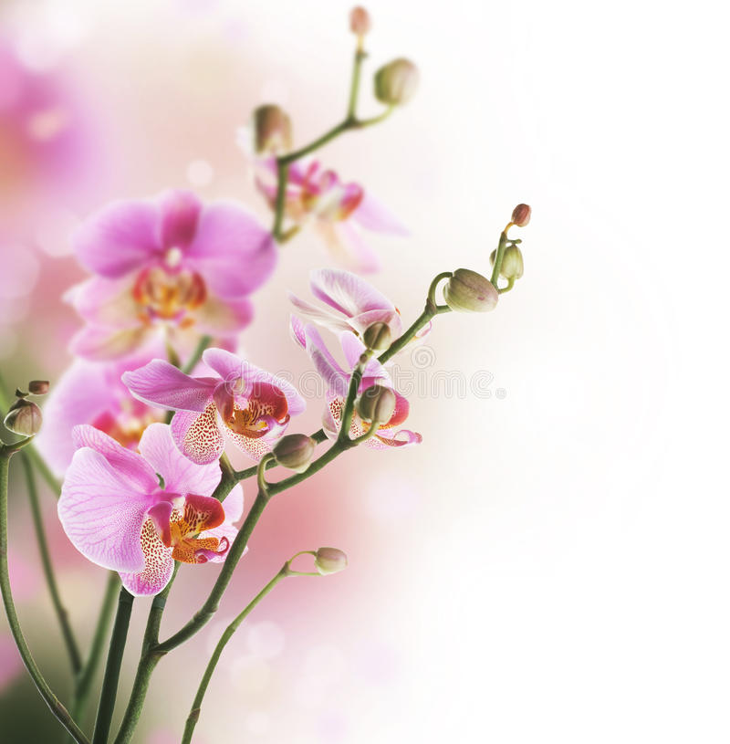 Orchid. Beautiful Orchid over Blurred background.Selective focus