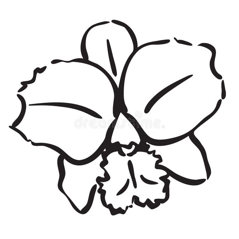 orchid royaltyfri illustrationer