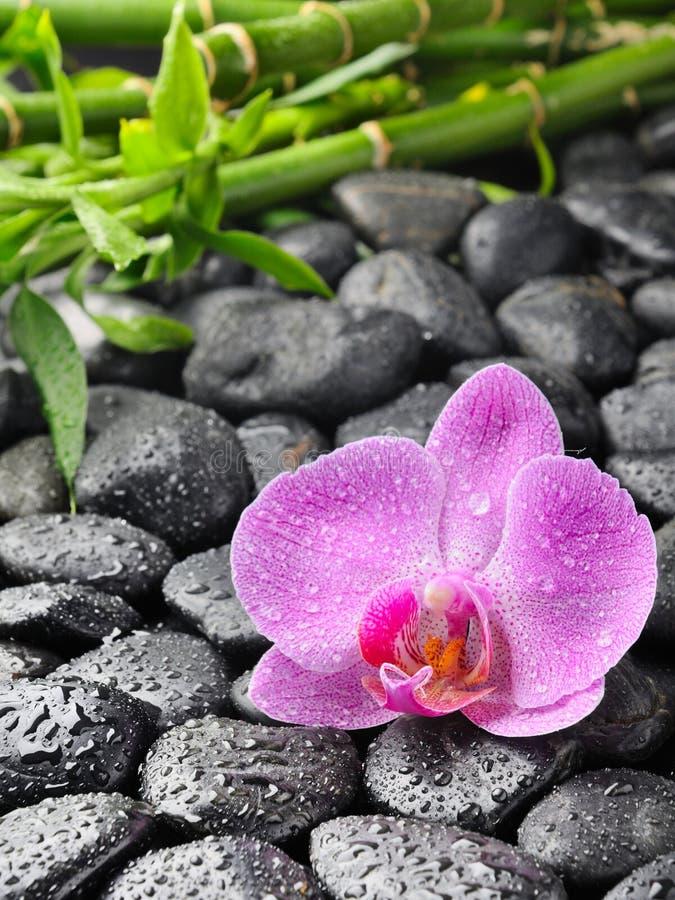 Download Orchid stock image. Image of boulder, freash, drops, design - 15765337