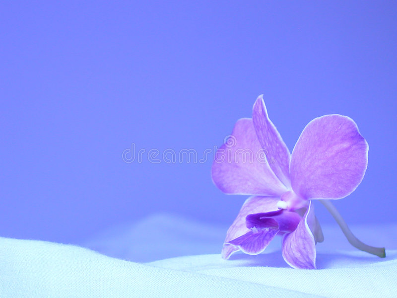 Download Orchid Royalty Free Stock Photo - Image: 176595