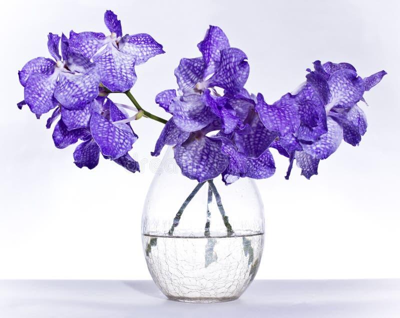 Download Orchid stock photo. Image of colour, flora, vase, fragile - 19239938