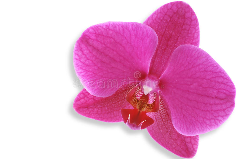 Download Orchid stock photo. Image of valentine, spring, tenderly - 22952178