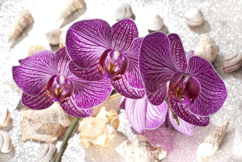 orchid arkivfoto