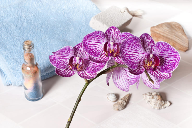 Download Orchid stock photo. Image of floral, flannel, growth - 24930662