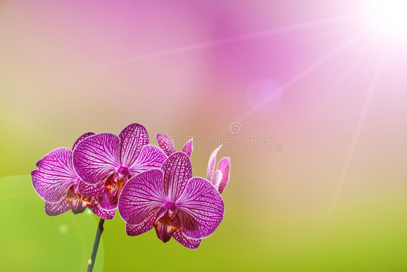 Download Orchid stock image. Image of backgrounds, plant, blade - 25119859