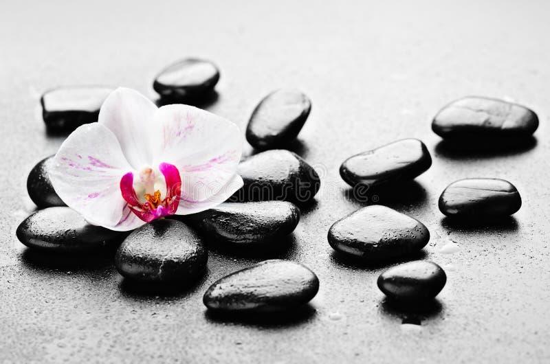 Download Orchid stock image. Image of boulder, handful, background - 25414403