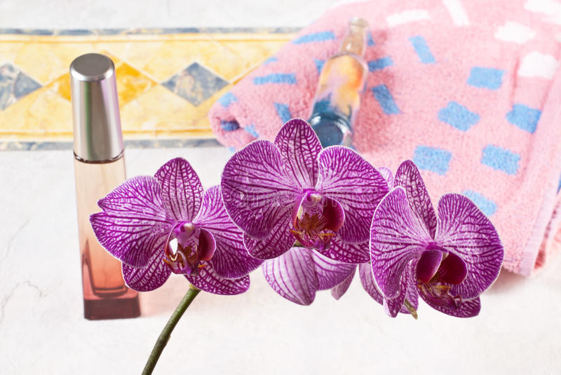 Download Orchid stock photo. Image of image, bright, bottle, flower - 25961880