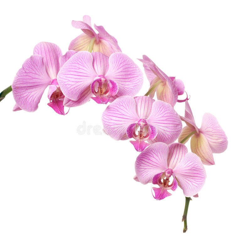 Orchid stock images