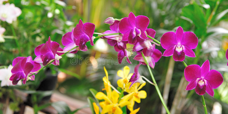 Orchid 7 Stock Images