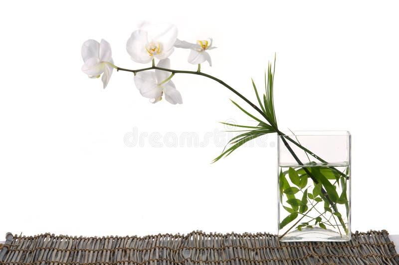 orchid στοκ φωτογραφίες με δικαίωμα ελεύθερης χρήσης