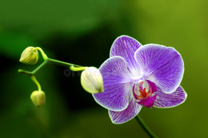 Download Orchid stock photo. Image of plants, orchid, flowers, growing - 9299276