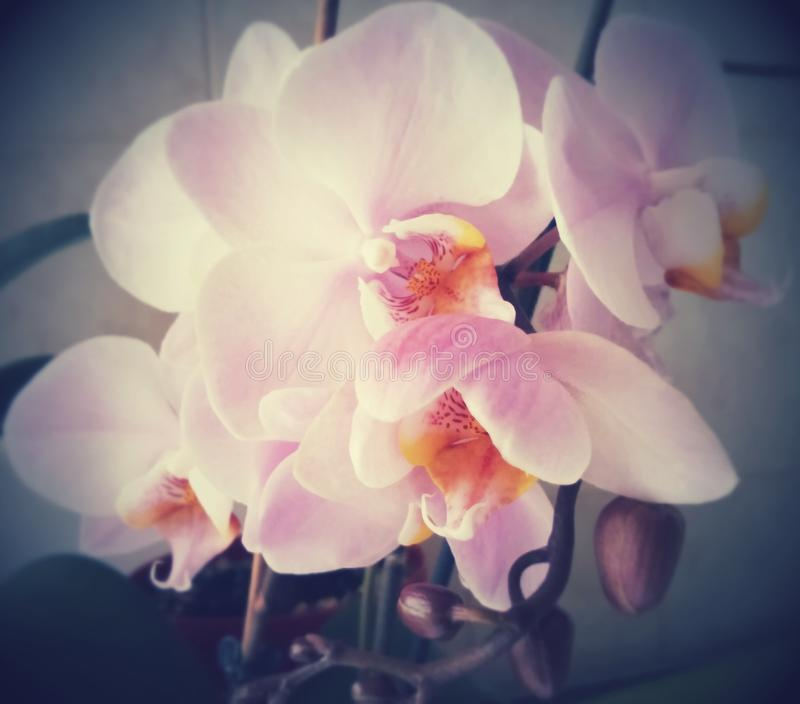 Orchid Art stock photo