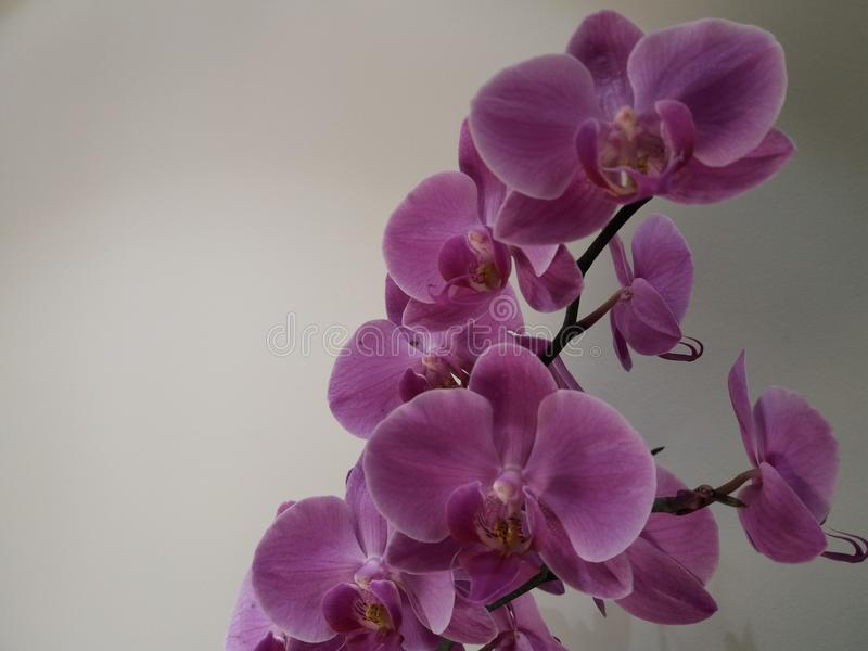 Orchid background stock photo