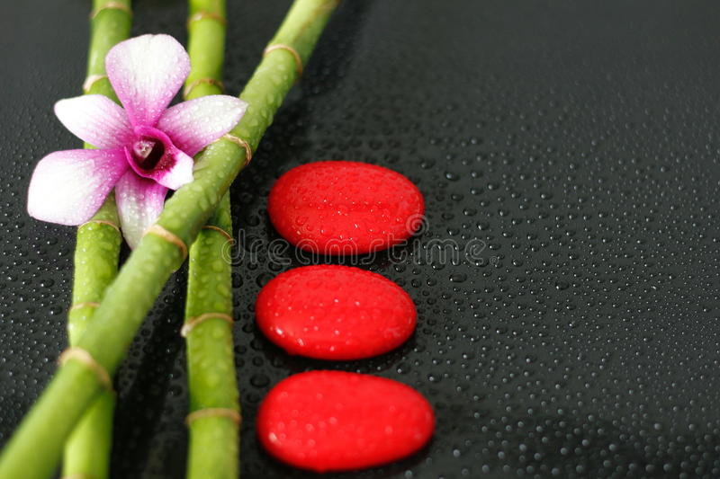 An orchid bicolor posed on bamboo with red pebbles laid in lifestyle zen on black background with drop of water. An orchid posed on bamboo with pebbles laid in royalty free stock images