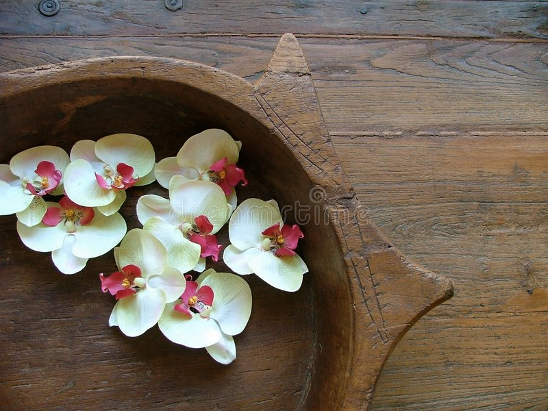Download Orchid blooms stock image. Image of bowl, ethnic, platter - 180189