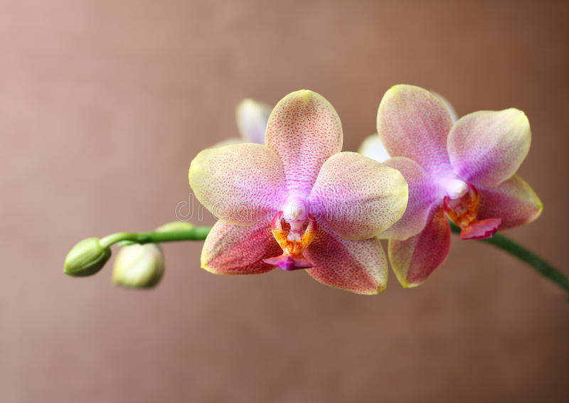 Download Orchid blossom detail stock image. Image of petal, floral - 20291653