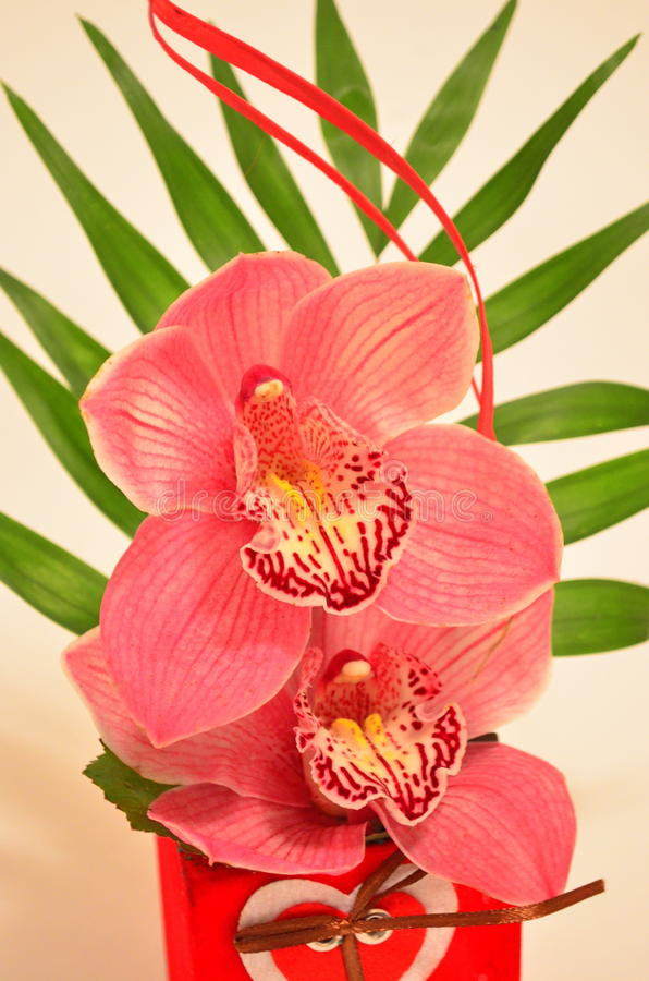 Orchid bouquet. Image of a beautiful orchid bouchet - Valentine Day's present royalty free stock images