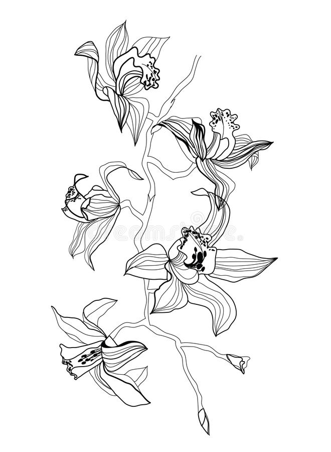 Orchid branch vector illustration