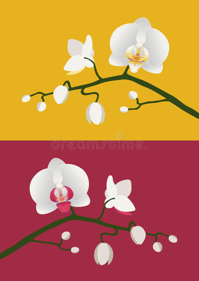 Download Orchid branch stock vector. Illustration of elegant, icon - 36787773