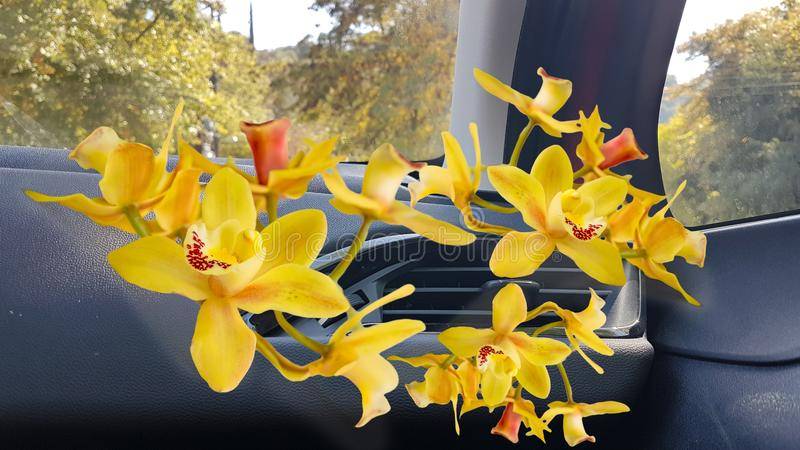 Orchid car air conductors aircondition road travel. Background royalty free stock photo