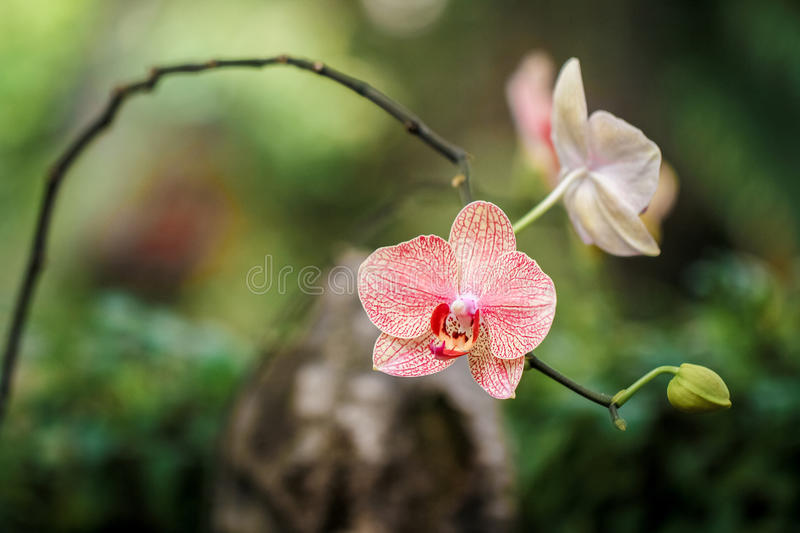 Orchid close up stock image