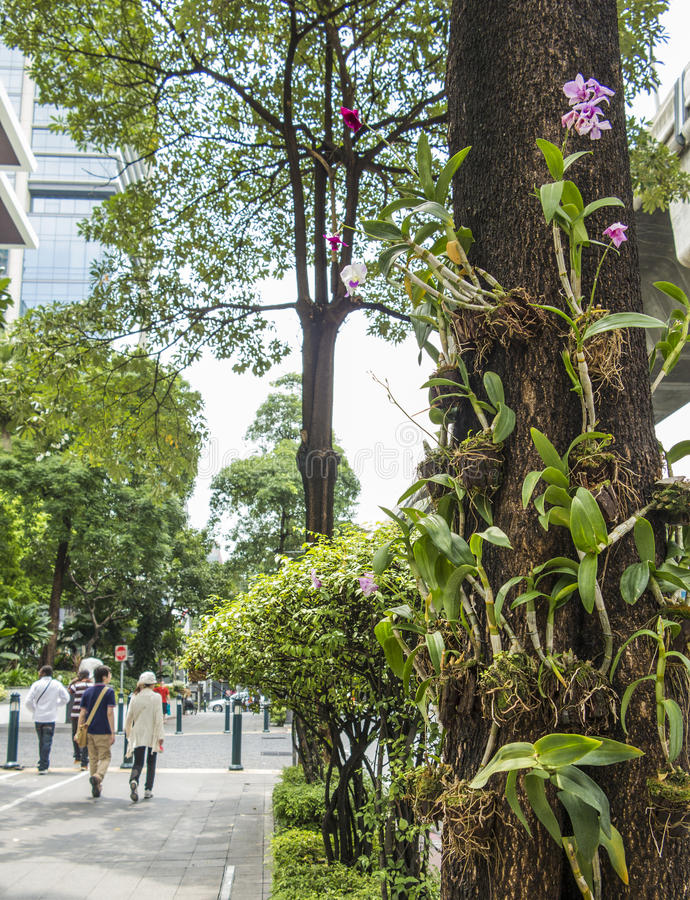 Orchid decoration in Bangkok stock photos