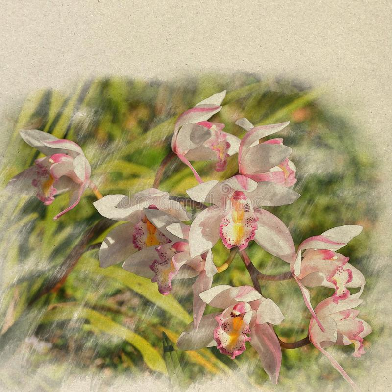 Orchid. Digital Art watercolor on vintage paper created by Photo. Grapher royalty free stock photos