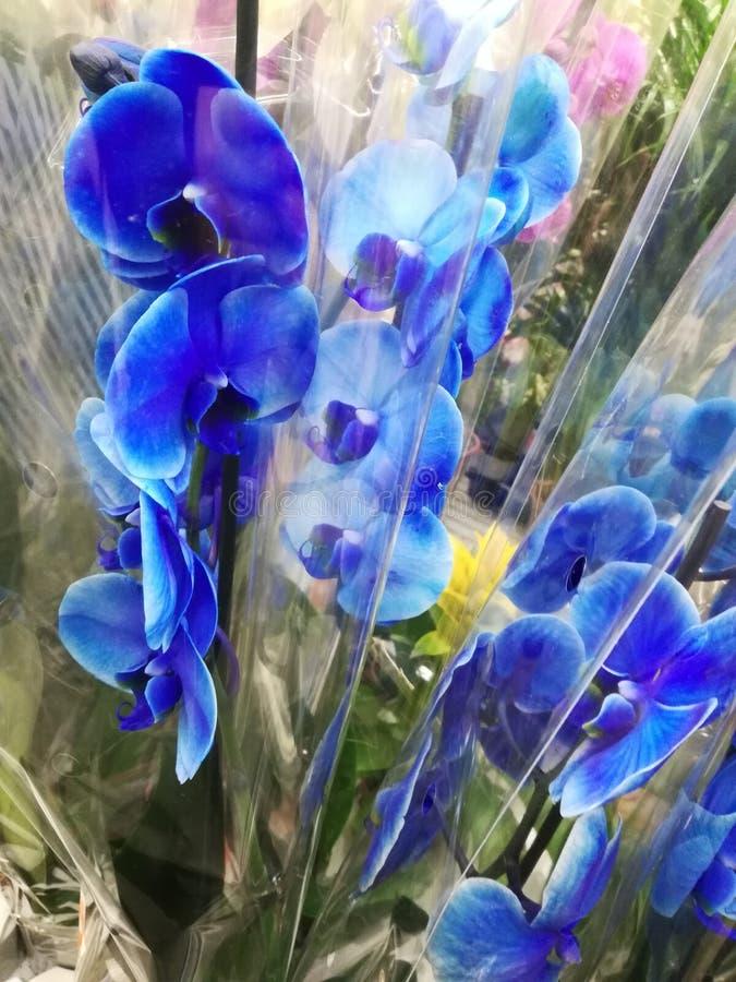 Orchid?e bleue photos libres de droits